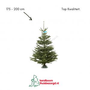 Nordmann kerstboom