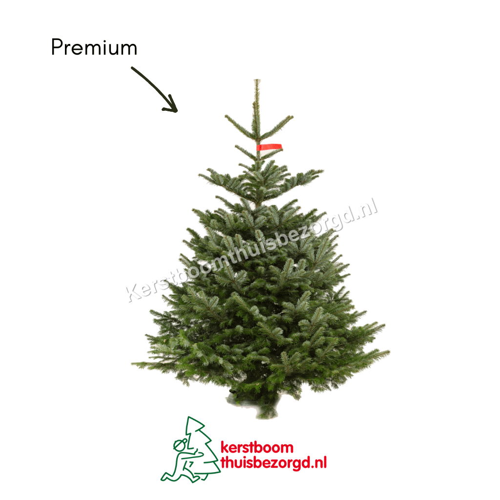 Premium Nordmann Kerstboom